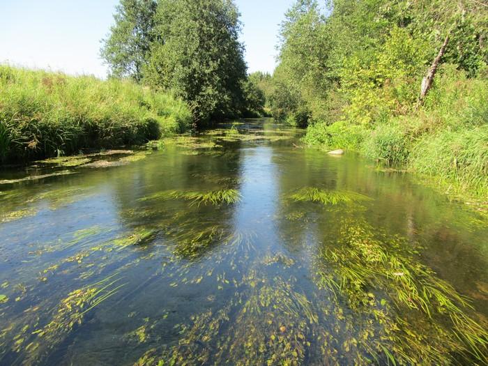 Ловля окуня в реках
